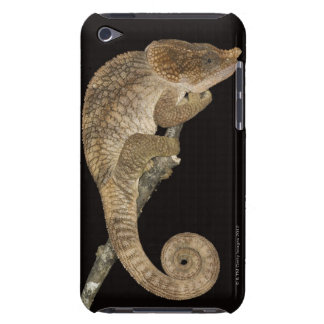 Short-horned chameleon(Calumma brevicornis) iPod Touch Case-Mate Case