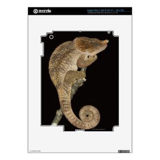 Short-horned chameleon(Calumma brevicornis) Skin For iPad 3
