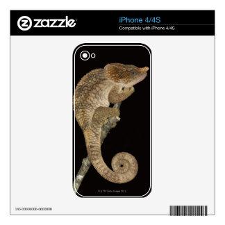 Short-horned chameleon(Calumma brevicornis) Skin For iPhone 4S