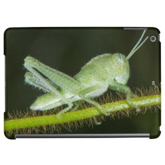 Short-horned grasshopper nymph, Odzala Cover For iPad Air