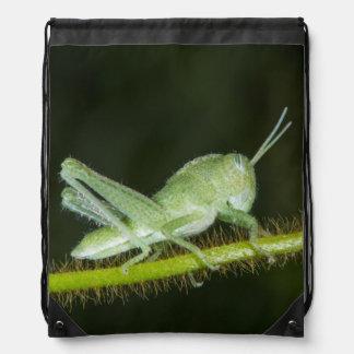 Short-horned grasshopper nymph, Odzala Drawstring Backpack