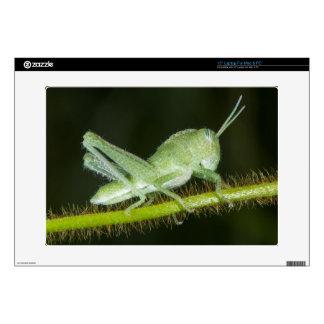 """Short-horned grasshopper nymph, Odzala Skins For 15"""" Laptops"""