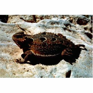 Short-horned Lizard Cutout