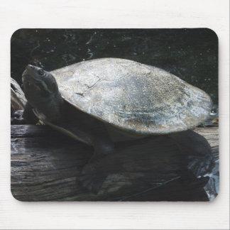Short-Necked Turtle Mousepad