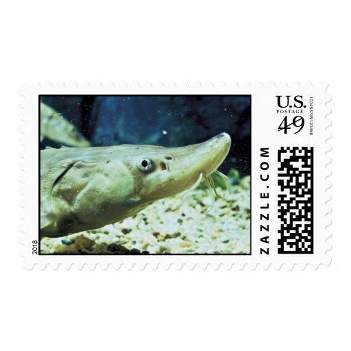 Short-nose Sturgeon Postage Stamps