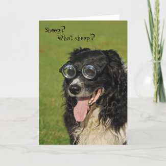 Short-sighted Border Collie Card card