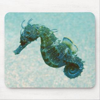 Short-Snouted Seahorse   Crimea, Russia Mouse Pad