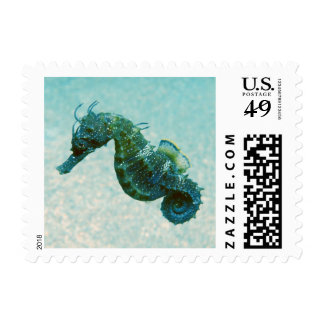 Short-Snouted Seahorse | Crimea, Russia Postage