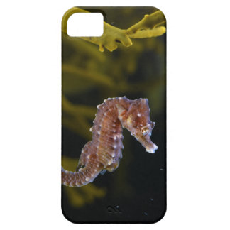 Short-snouted Seahorse Hippocampus hippocampus iPhone SE/5/5s Case