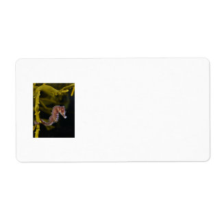Short-snouted Seahorse Hippocampus hippocampus Label