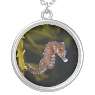 Short-snouted Seahorse Hippocampus hippocampus Round Pendant Necklace