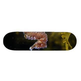 Short-snouted Seahorse Hippocampus hippocampus Skateboard Deck