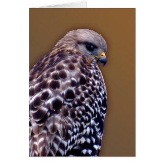 Short-tail Hawk Cards