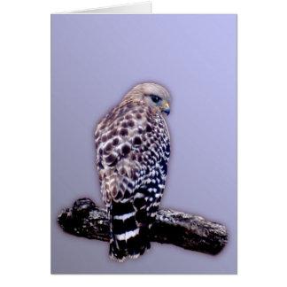 Short-tail Hawk Greeting Card