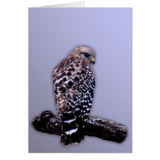 Short-tail Hawk Card