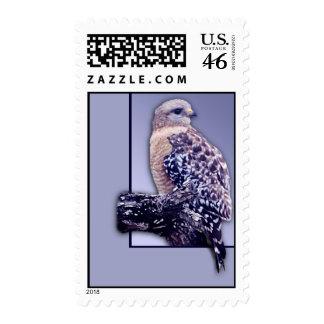 Short-tail Hawk Stamp