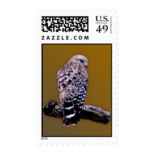 Short-tail Hawk Postage Stamp