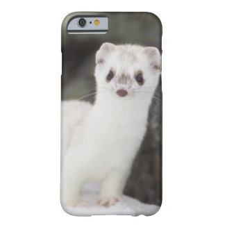 Short-tailed weasel hunting for voles barely there iPhone 6 case