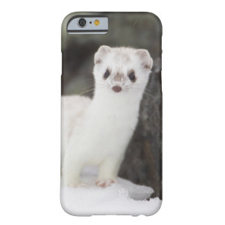 Short-tailed weasel hunting for voles iPhone 6 case