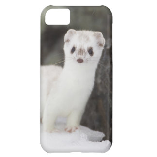 Short-tailed weasel hunting for voles cover for iPhone 5C