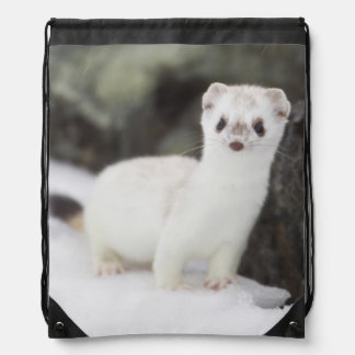 Short-tailed weasel hunting for voles drawstring bag