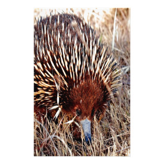 shortbeak echidna waiting for opportunity success stationery design