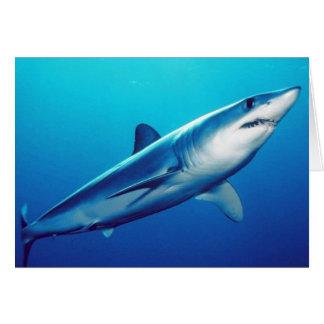 Shortfin Mako Shark Card