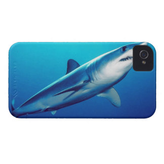 Shortfin Mako Shark Case-Mate iPhone 4 Case