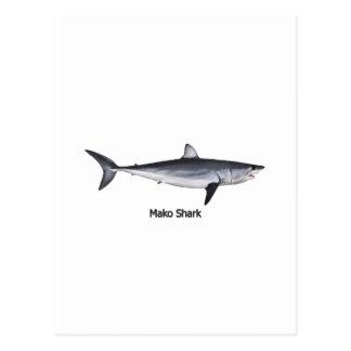 Shortfin Mako Shark Illustration Postcard
