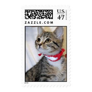 Shorthair Grey (Gray) Tabby Kitten Postage Stamps