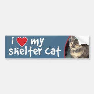 Shorthair Tortoiseshell Kitten BumperSticker/Decal Bumper Sticker