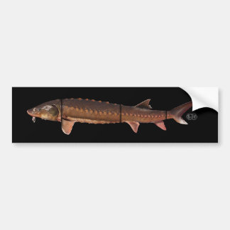 Shortnose Sturgeon - Acipenser brevirostrum Bumper Stickers