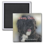 Shorty Lhasa Apso-Shih Tzu Magnet-personalize