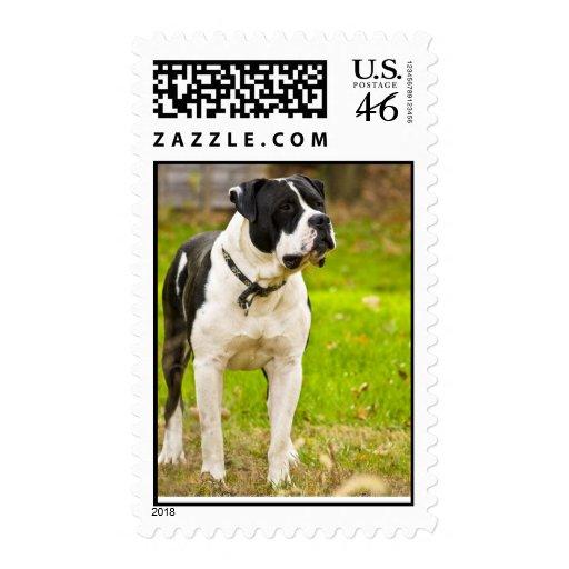 Shorty - Postage Stamp