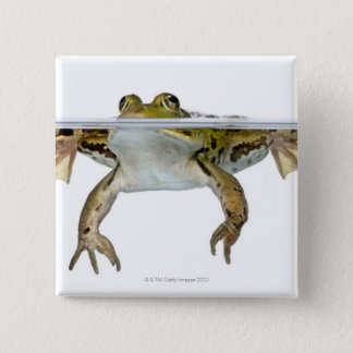 Shot of a Edible frog surfacing in front of a Button