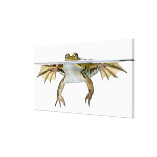 Shot of a Edible frog surfacing in front of a Canvas Print