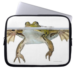 Shot of a Edible frog surfacing in front of a Computer Sleeve