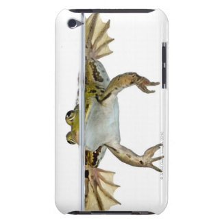 Shot of a Edible frog surfacing in front of a iPod Touch Case