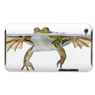 Shot of a Edible frog surfacing in front of a iPod Touch Case-Mate Case