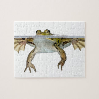 Shot of a Edible frog surfacing in front of a Jigsaw Puzzle