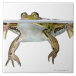 Shot of a Edible frog surfacing in front of a Large Square Tile
