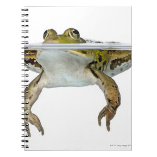 Shot of a Edible frog surfacing in front of a Notebook