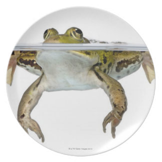 Shot of a Edible frog surfacing in front of a Plate