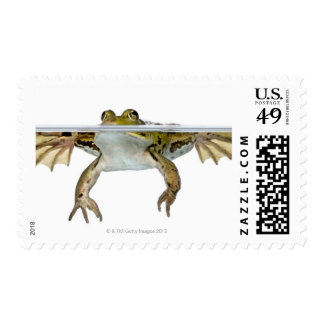 Shot of a Edible frog surfacing in front of a Postage Stamps