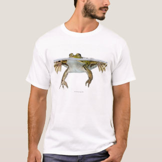 Shot of a Edible frog surfacing in front of a T-Shirt