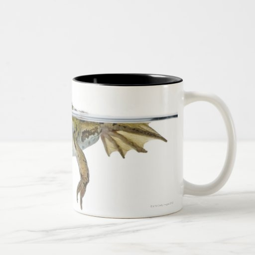 Shot of a Edible frog surfacing in front of a Two-Tone Coffee Mug