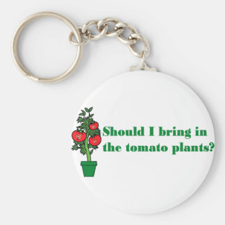 Should I bring in the tomato plants? Keychain