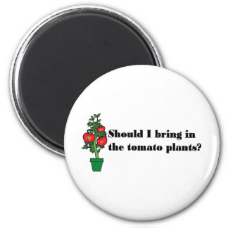 Should I bring in the tomato plants? Magnet