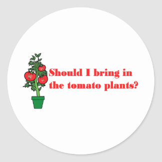 Should I bring in the tomato plants? Classic Round Sticker