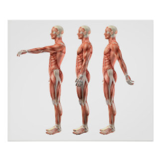 Shoulder flexion, extension and hyperextension poster